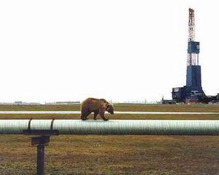 Pipeline bear