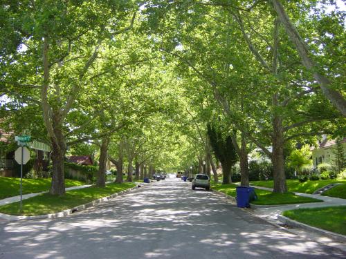 Tree lined street